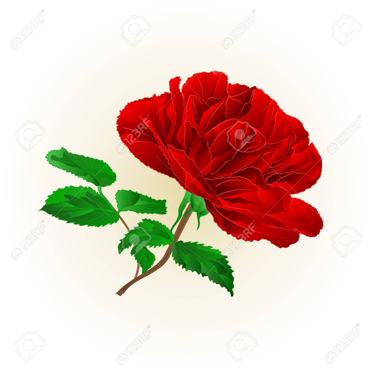 Simple Red Rose Stem With Leaves On White Background Vector Illustration Royalty Free Cliparts Vectors And Stock Illustration Image 94824134