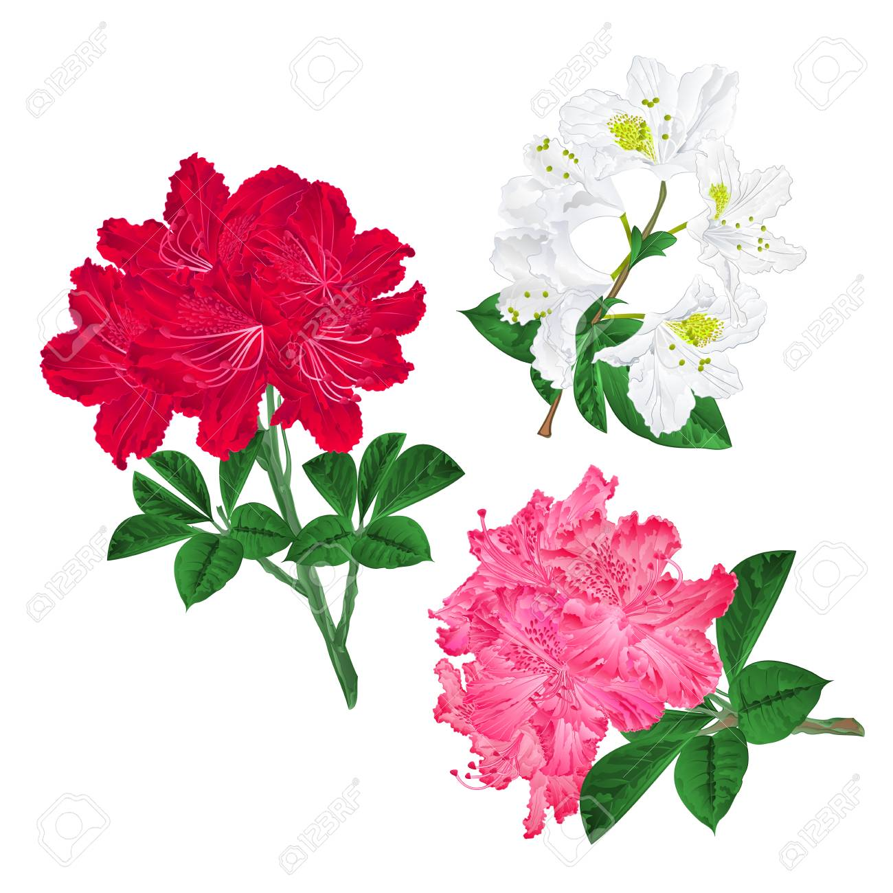 Branches Of Pink Red And White Flowers Stock Photography Royalty