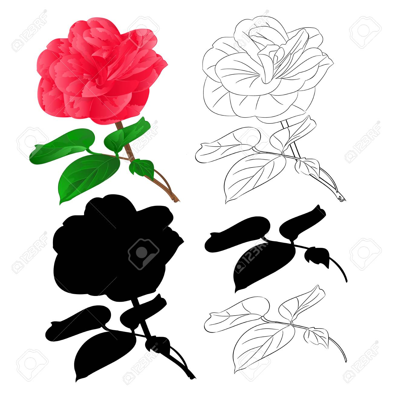 Flower Camellia Japonica With Buds Natural Outline And Silhouette