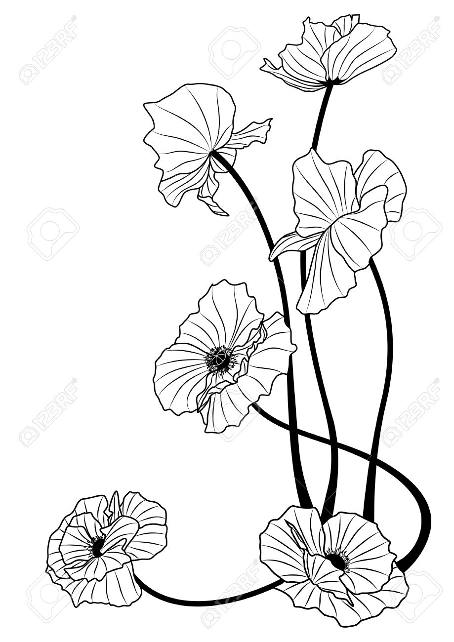 The Poppies In Black And White Colors Royalty Free Cliparts