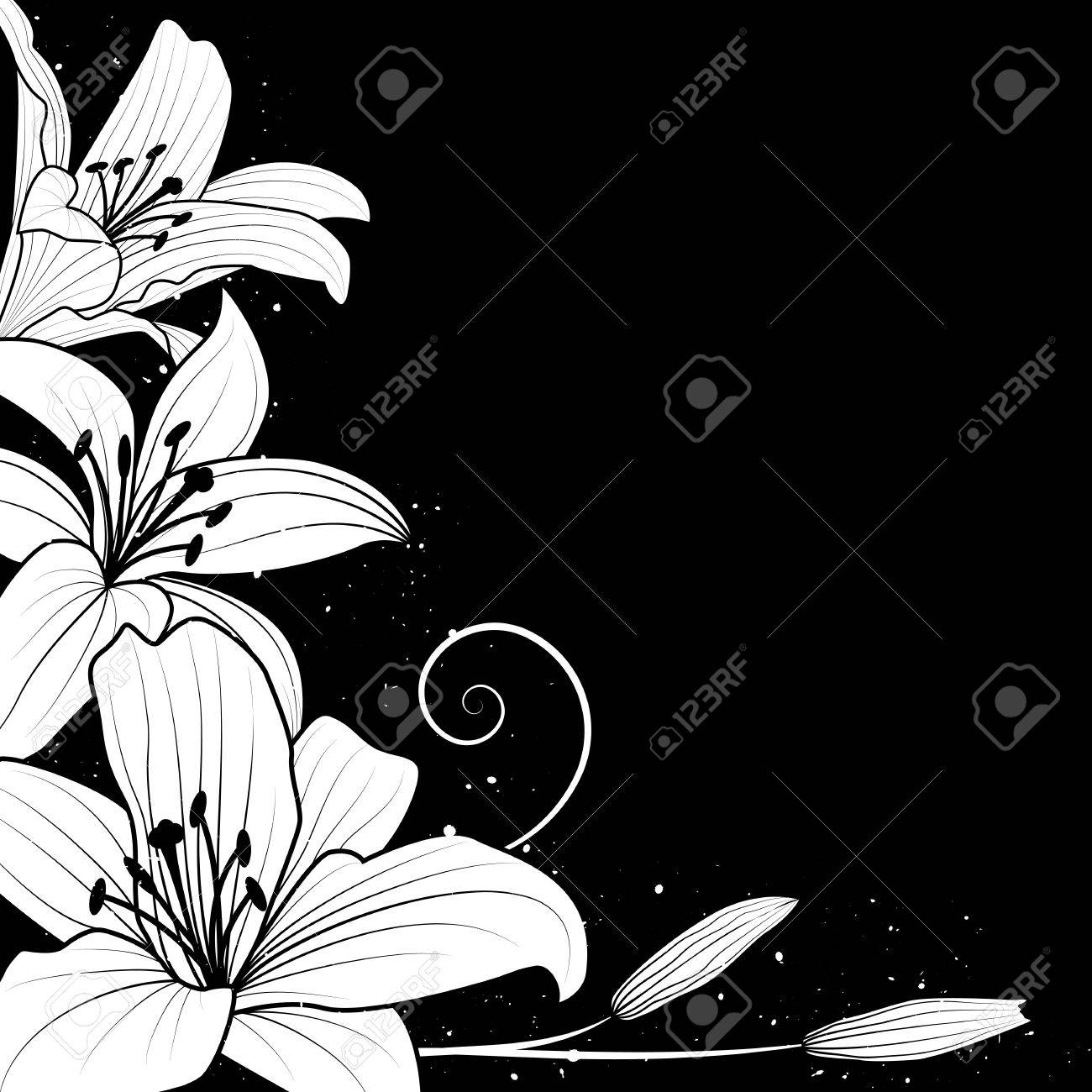 illustration with flowers of lily in black and white colors Stock Vector - 14477448