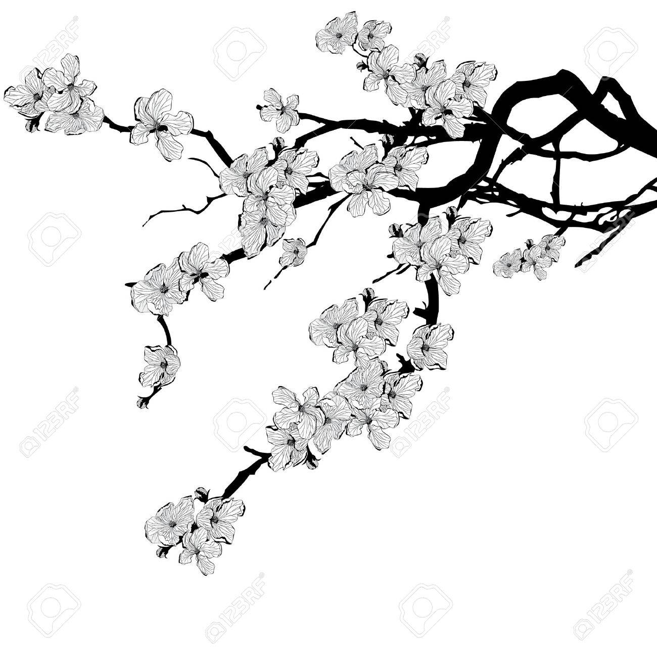 vector illustration of branch of cherry tree in black and white colors - 54335642