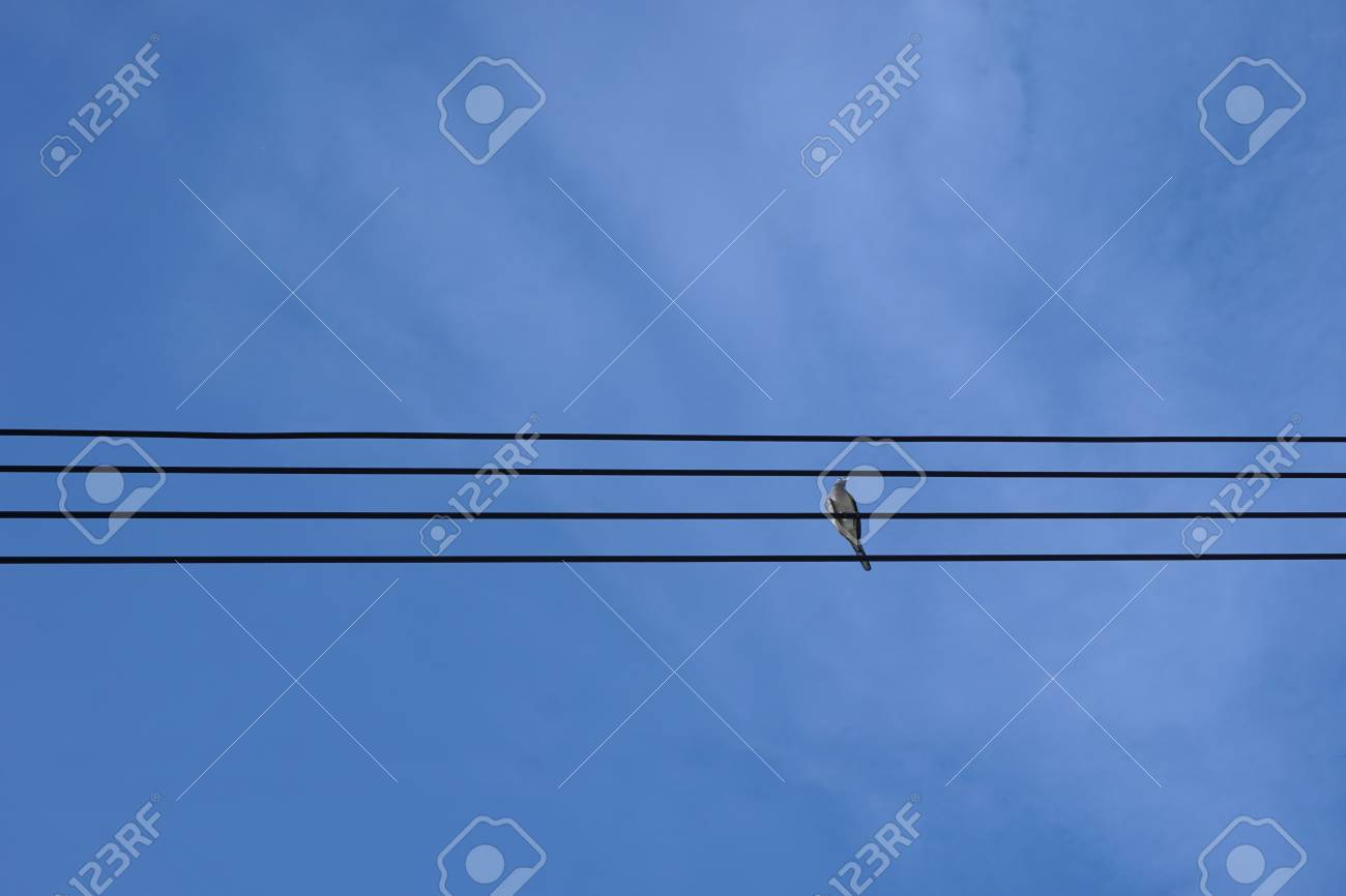 Abstract Brid On Electric Wire With Sky Background Stock Photo ...