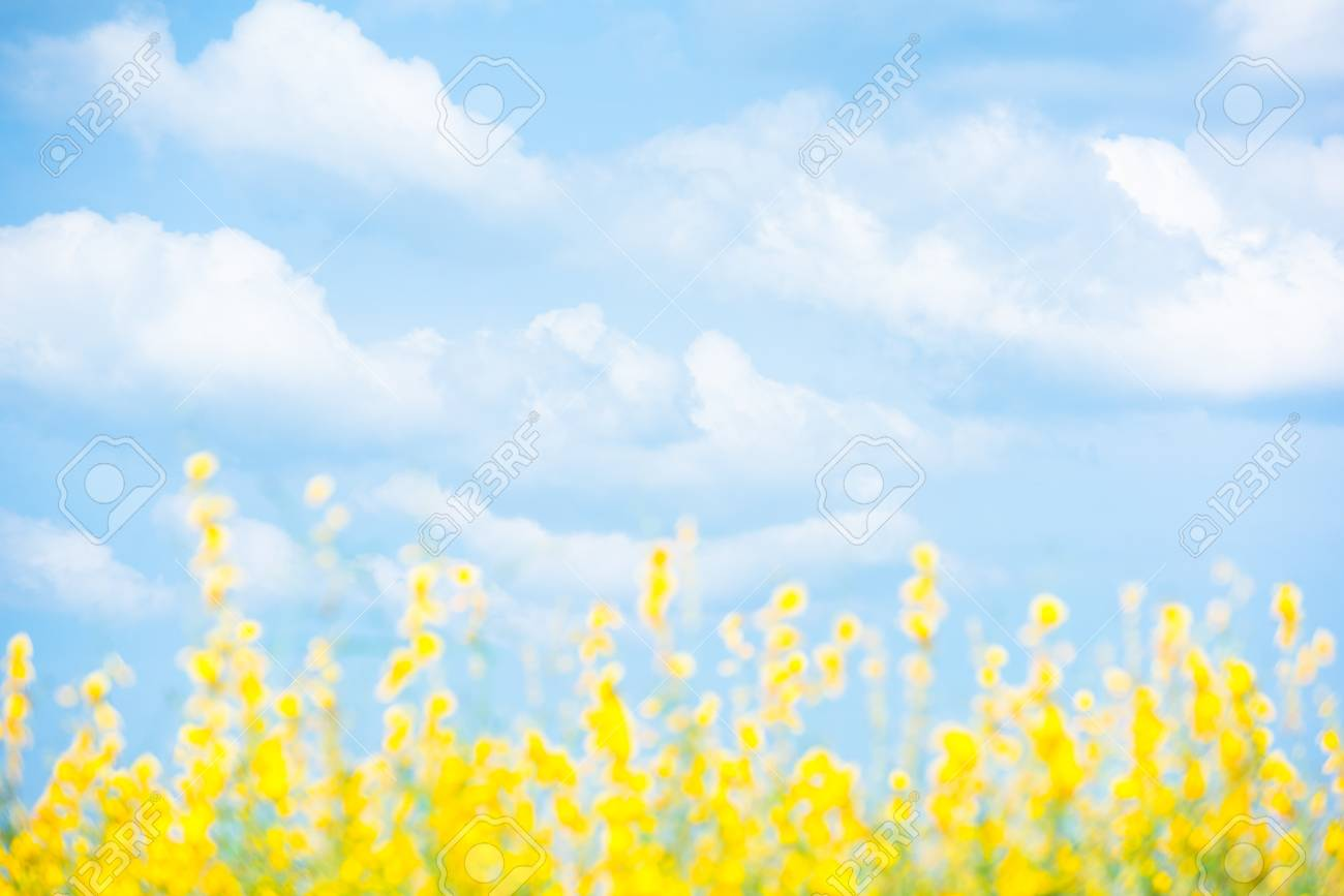 Green Field With Yellow Flowers Under Bright Clouds And Light