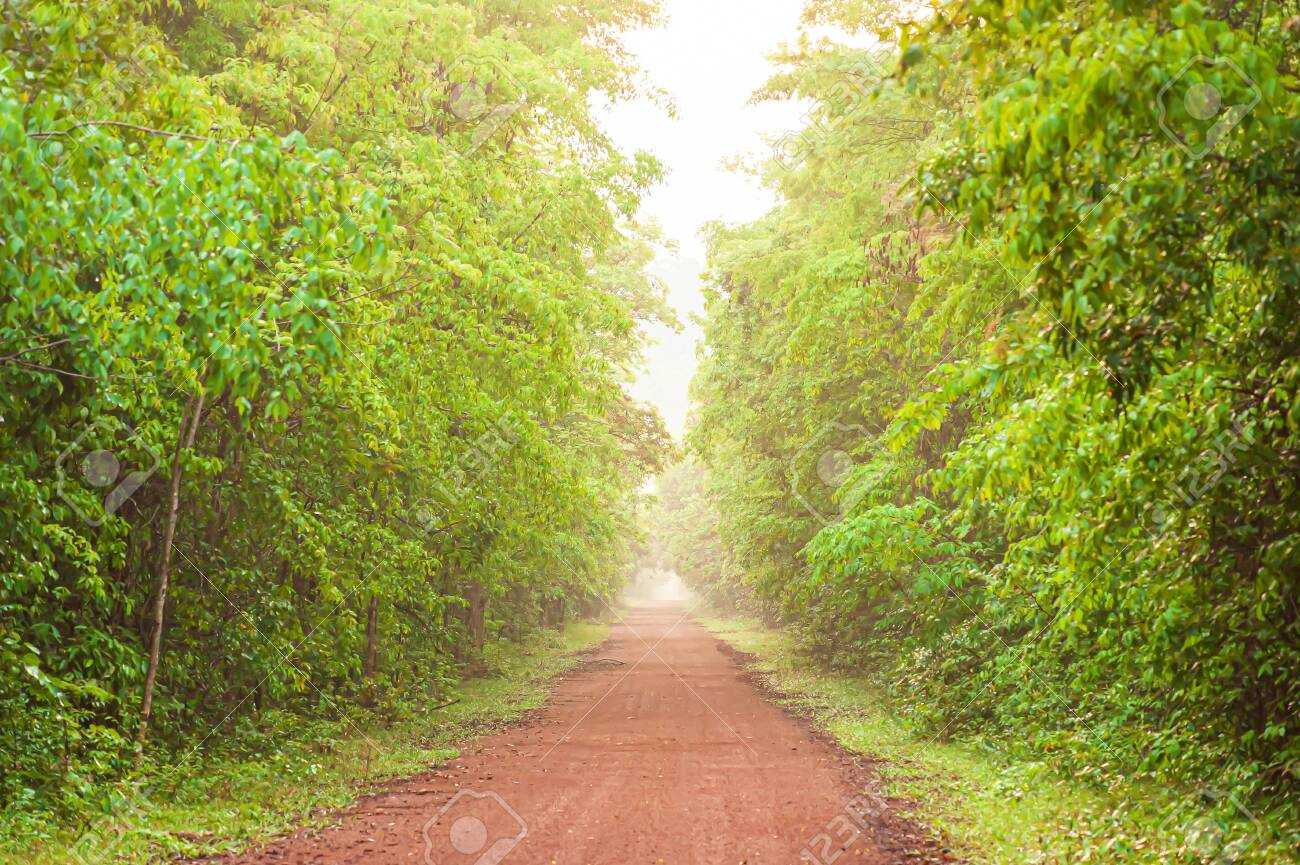 A long straight dirt road leading towards a tropical forest in early morning. Pang Sida National Park, Thailand. Focus on foreground. - 148236198