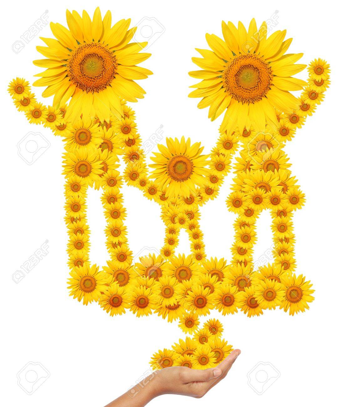 hand idea with sunflower family image isolate on white Stock Photo - 16068332