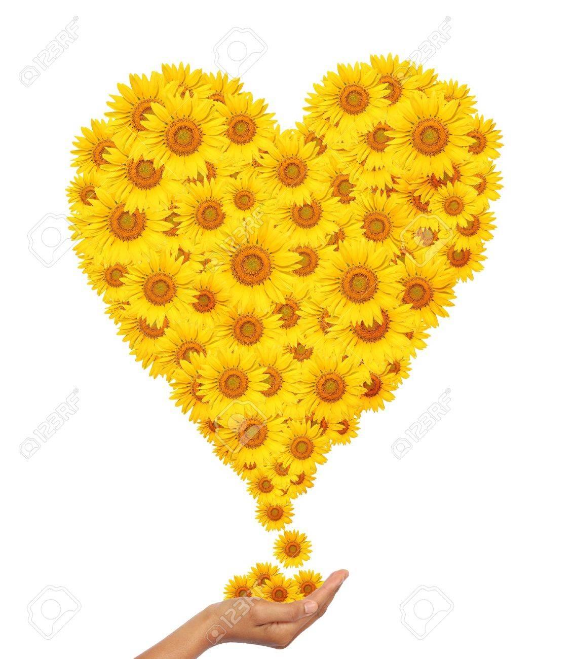 Hand Idee Mit Sonnenblumen Herz Bild Isoliert Auf Wei Em Lizenzfreie