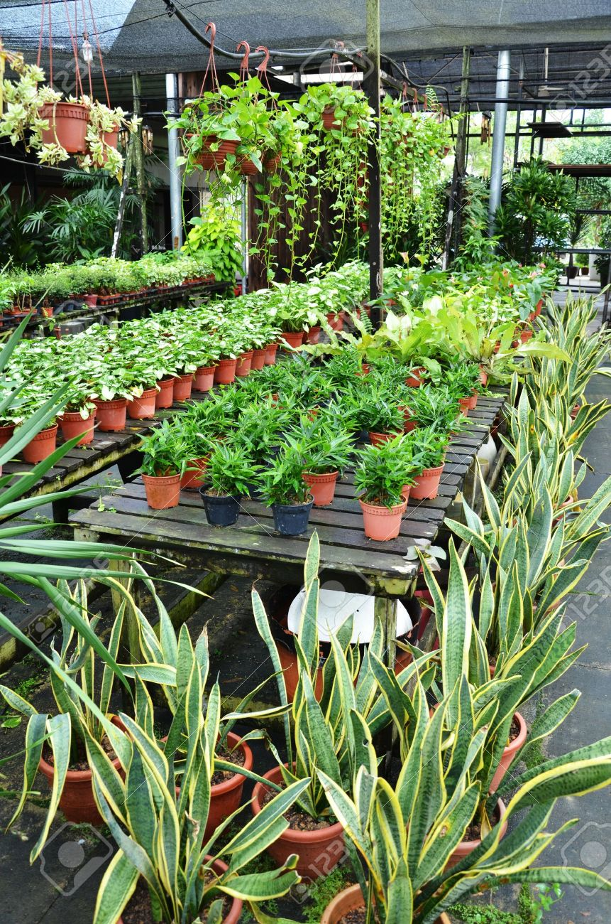 garden shop. Garden Shop Stock Photo - 18313685 H