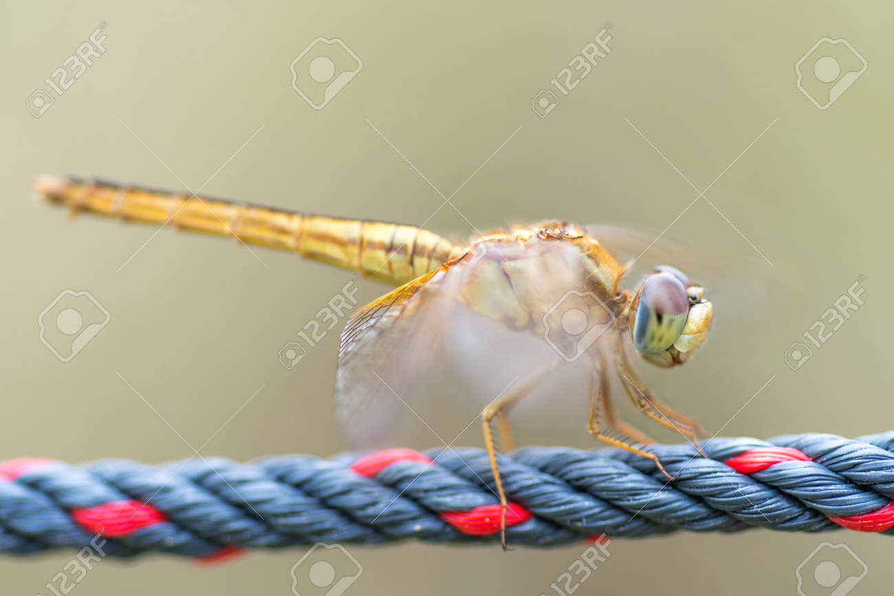 Close up detail of dragonfly with blur background. Selective focus on the eye - 166142997