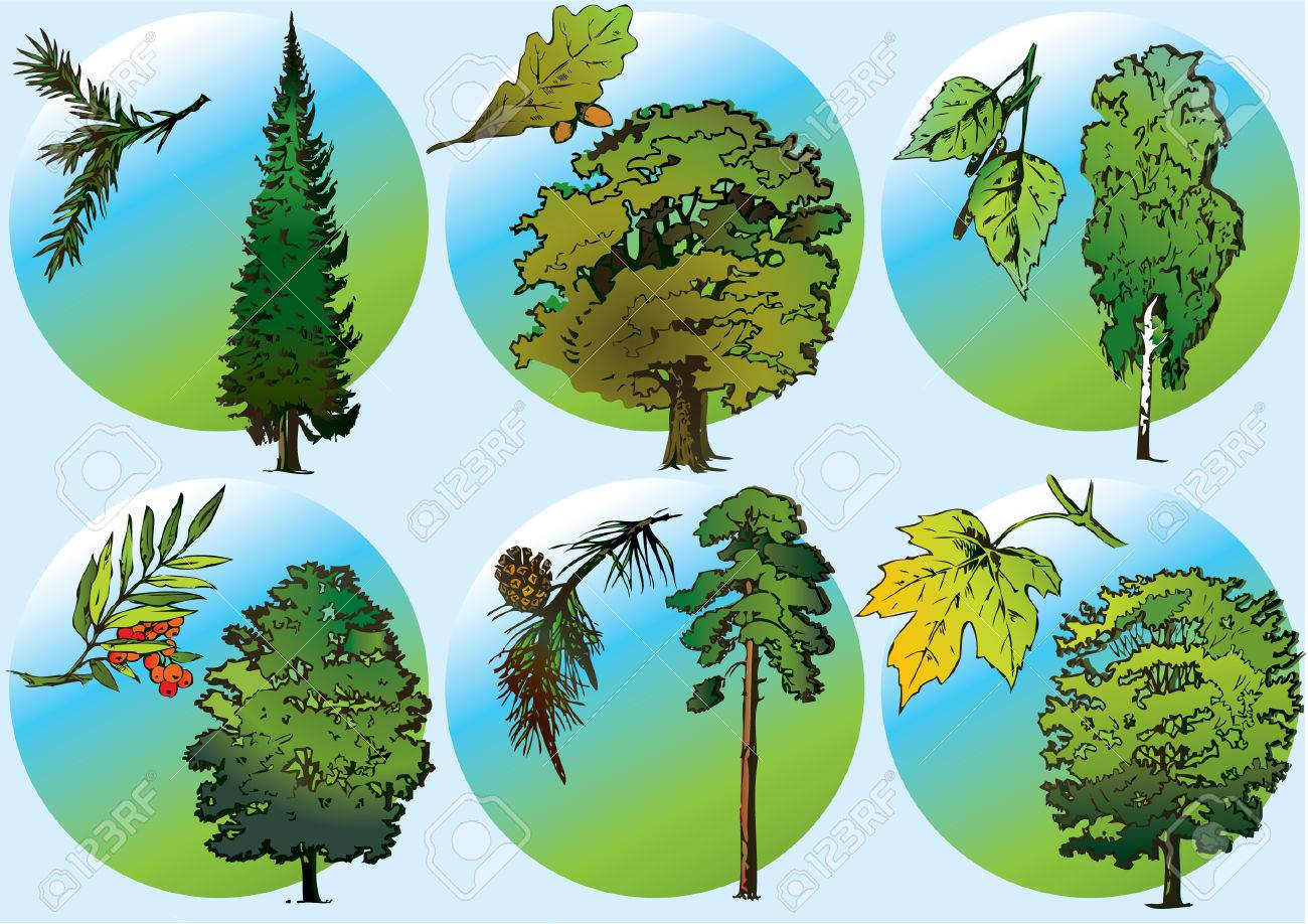 Trees and foliage of various plants. Vector art-illustration. Stock Vector - 5374109