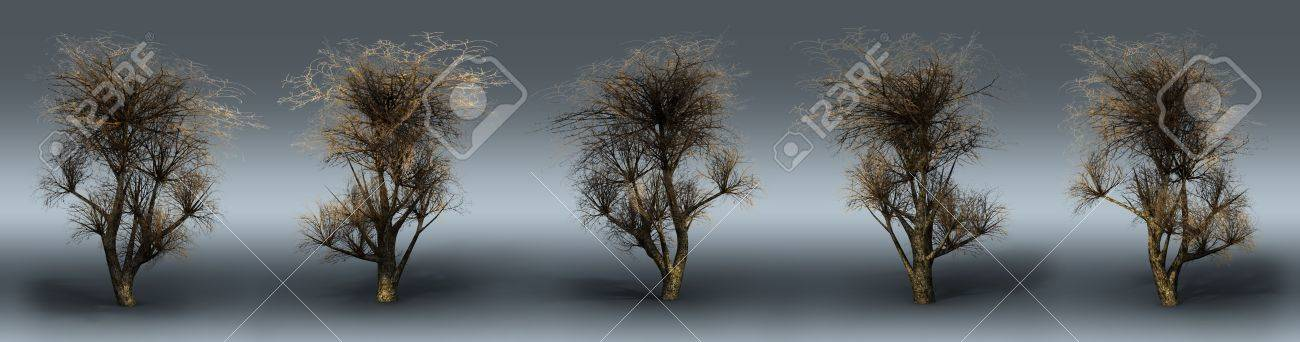 Trees on a grey background. 3D art-illustration. Stock Photo - 6015171