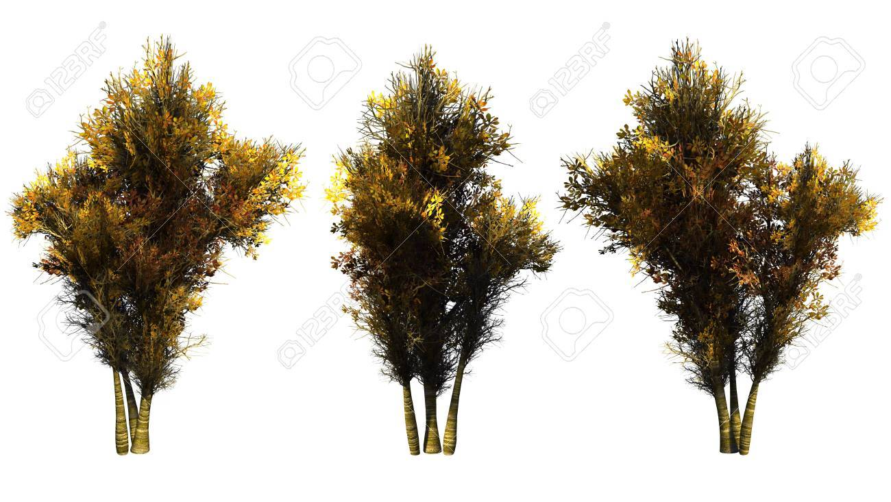 Autumn trees on a white background. 3D art-illustration. Stock Illustration - 6032997