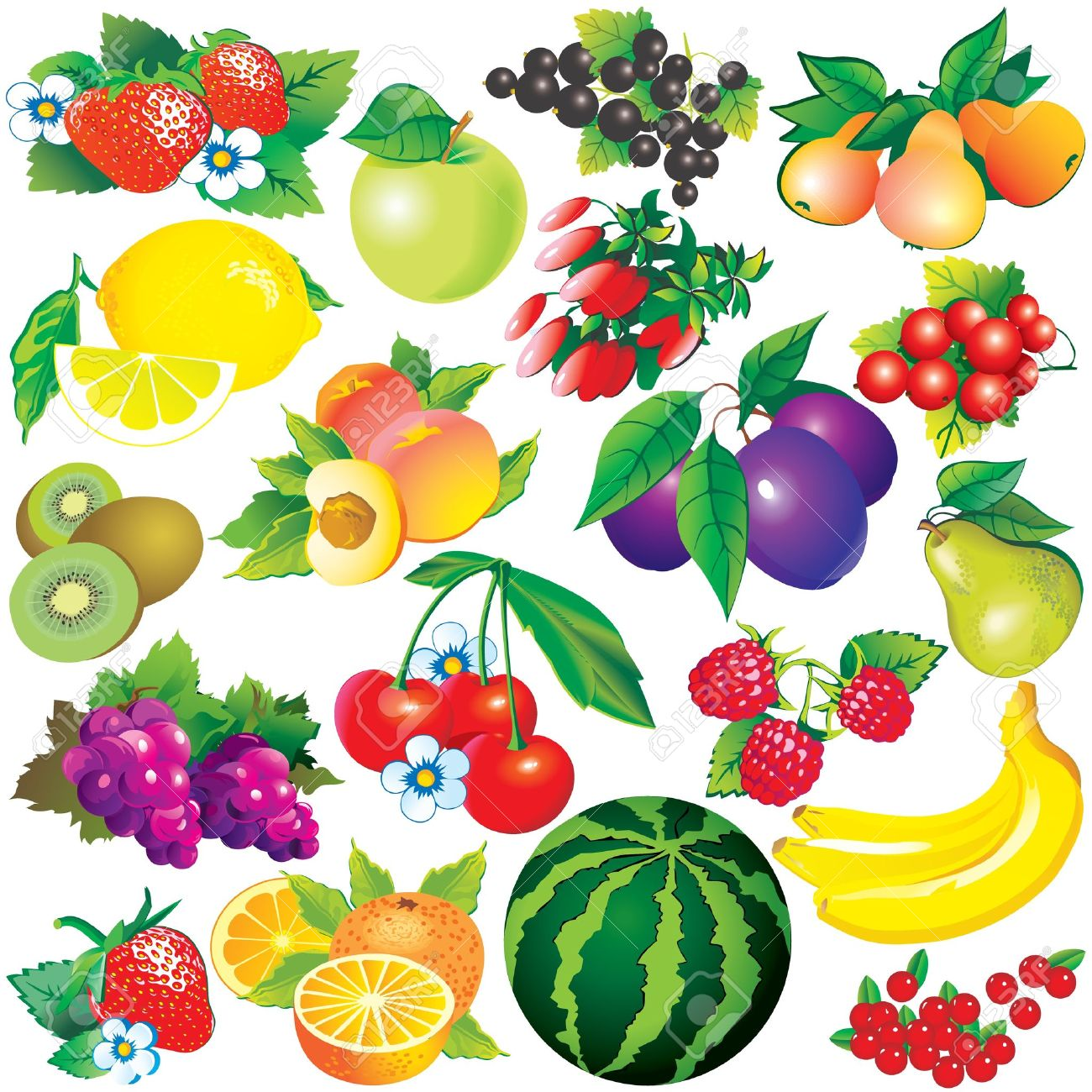 Juicy fruits  Healthy food  Vector art-illustration on a white background Stock Vector - 12842065