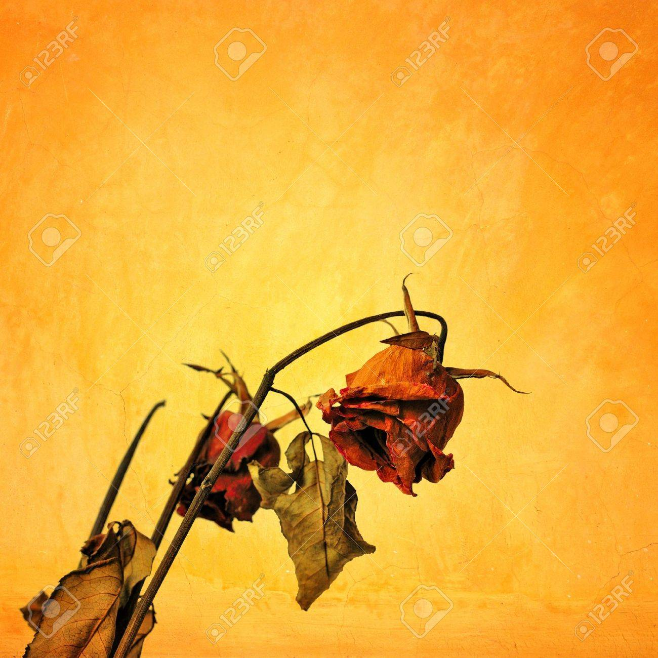 Dried rose in grunge style, Concept of Sad Valentine day Stock Photo - 17347025
