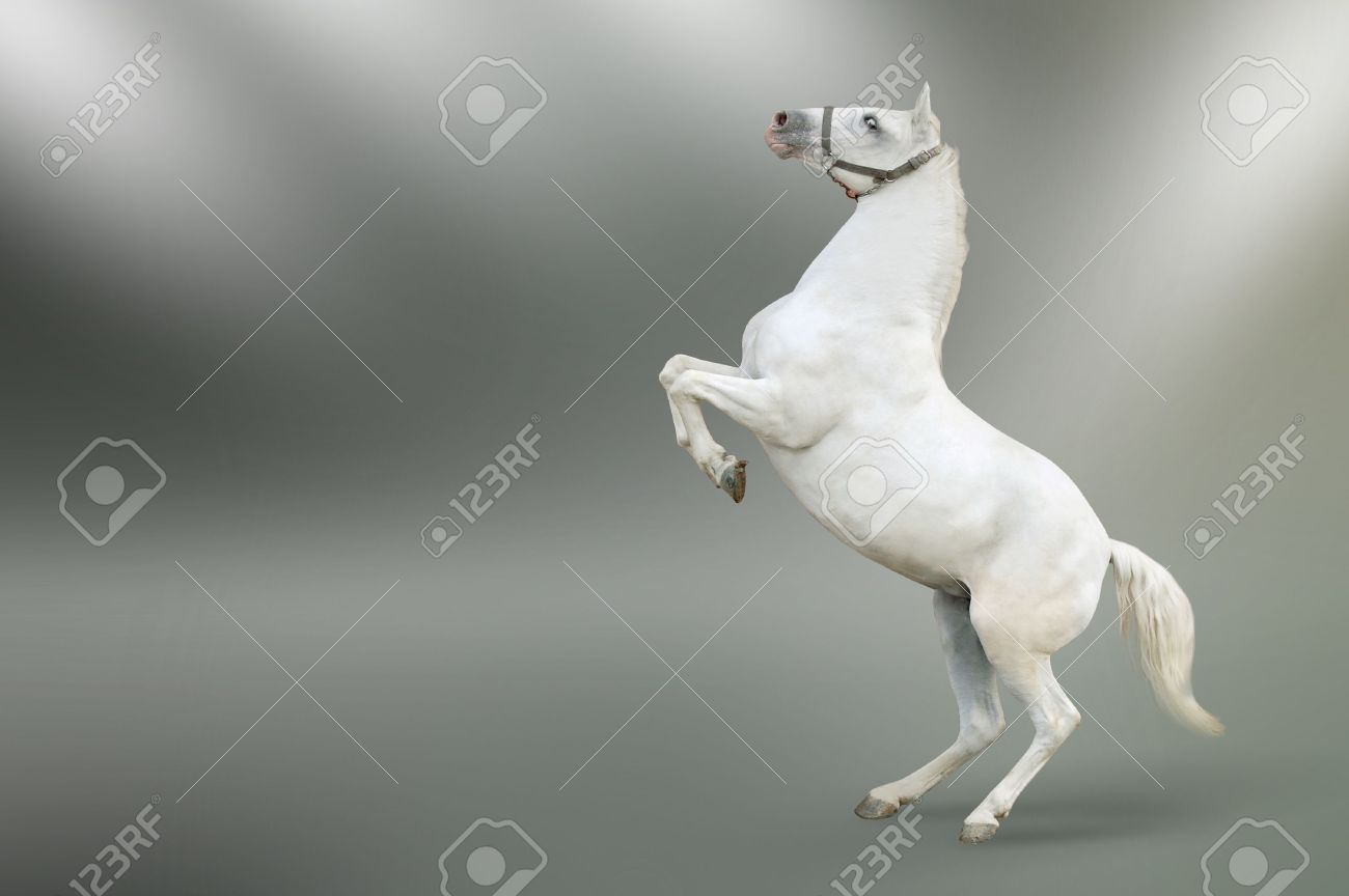 white horse rearing isolated Stock Photo - 6072241