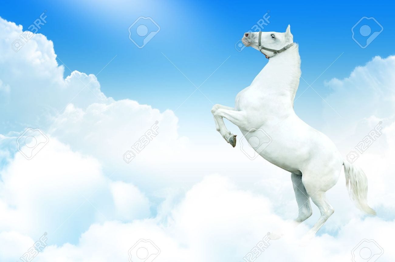 white horse rearing in the sky, surrounded by clouds Stock Photo - 6072236