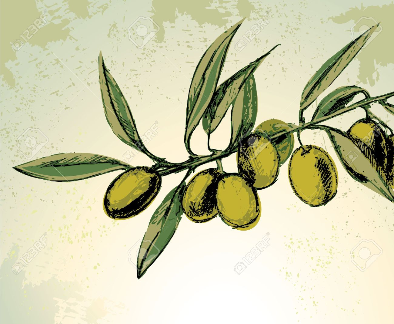 Branch with green olives Stock Vector - 7102856