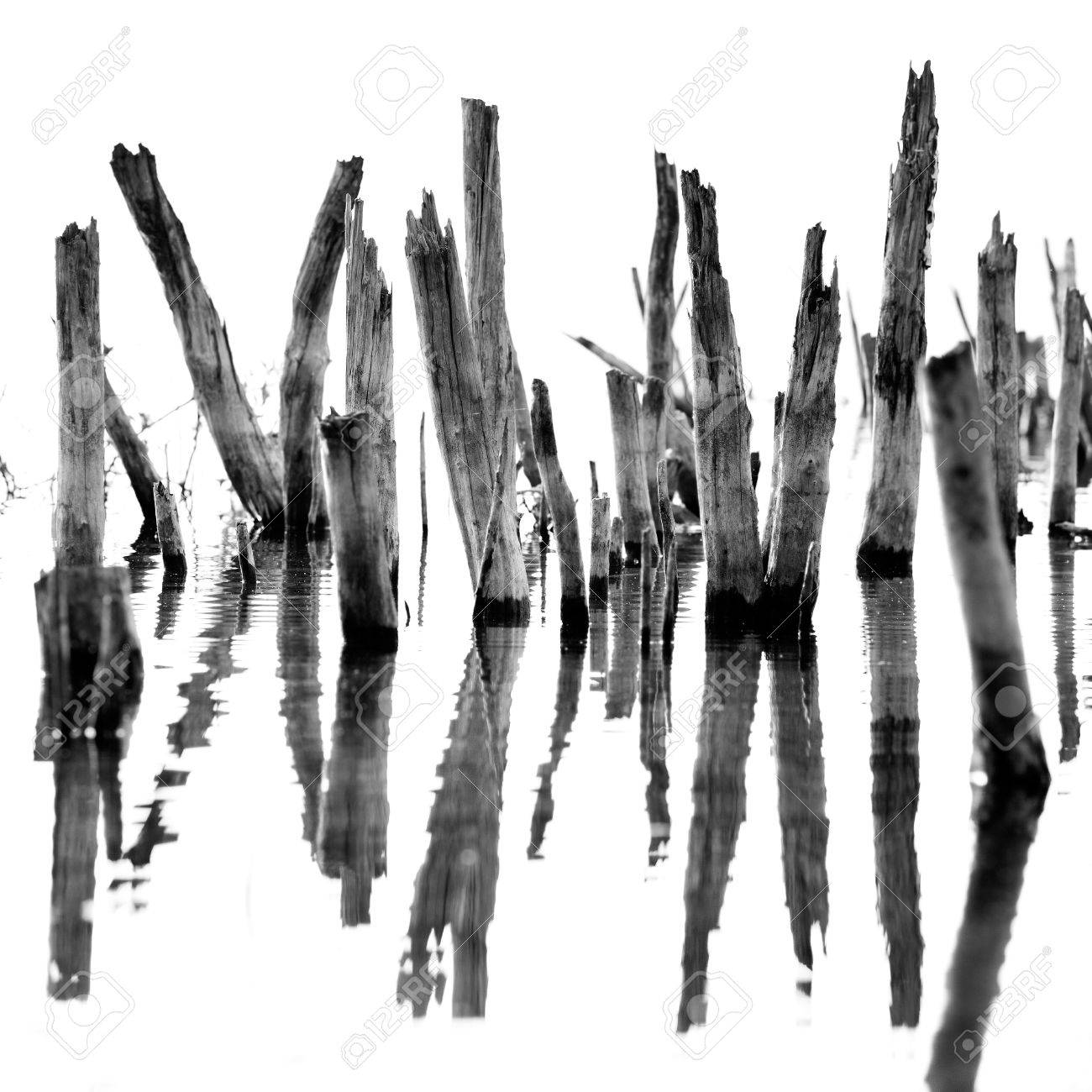 black and white abstract landscape of old dry tree in water stock photo