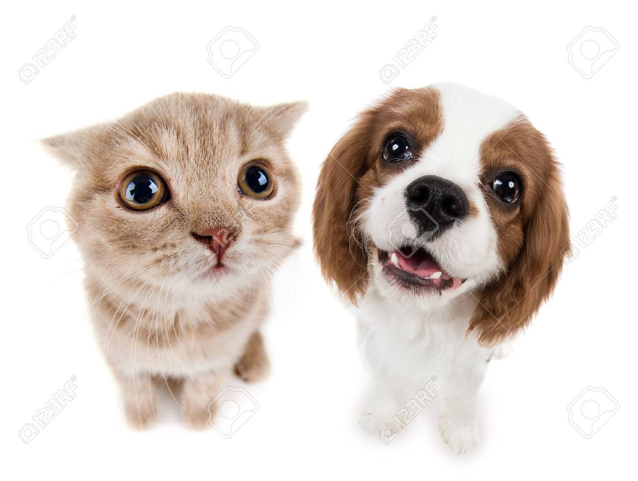 kitten images u0026 stock pictures royalty free kitten photos and