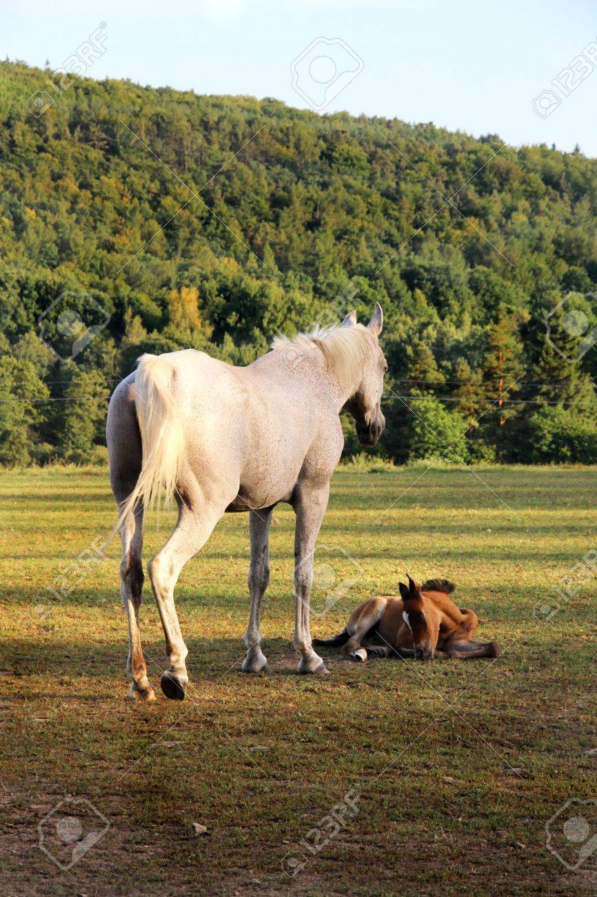 Horse And Funny Baby Horse Stock Photo Picture And Royalty Free Image Image 17150941