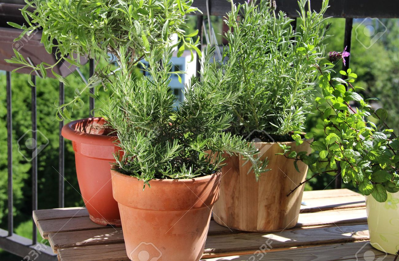 Rosemary, mint, lavender and other herbs in the pot Stock Photo - 20133155