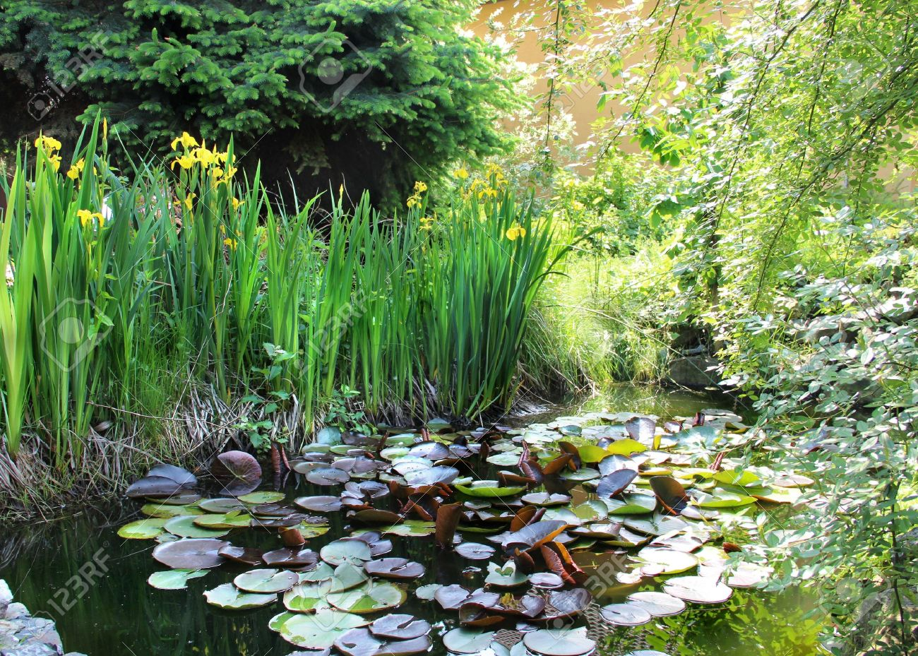 Brilliant House Beautiful Garden With Small Pond Stock Photo Picture And Largest Home Design Picture Inspirations Pitcheantrous