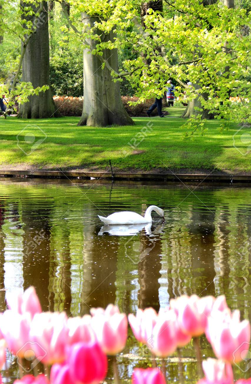 Beautiful Park In Spring With Pond Trees Flowers And Swan Stock
