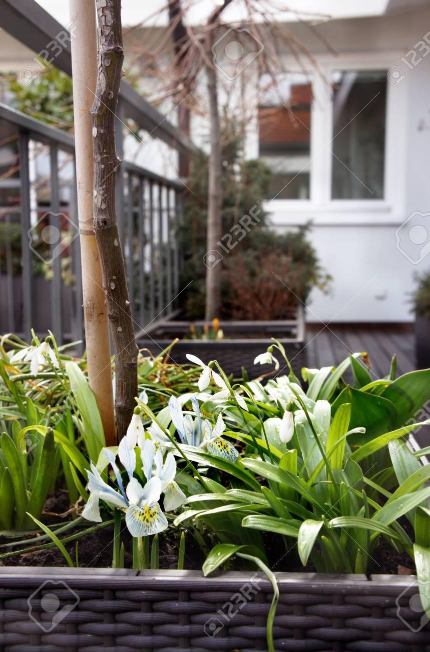 Beautiful Modern Terrace Seasonal Spring Flowers Stock Photo