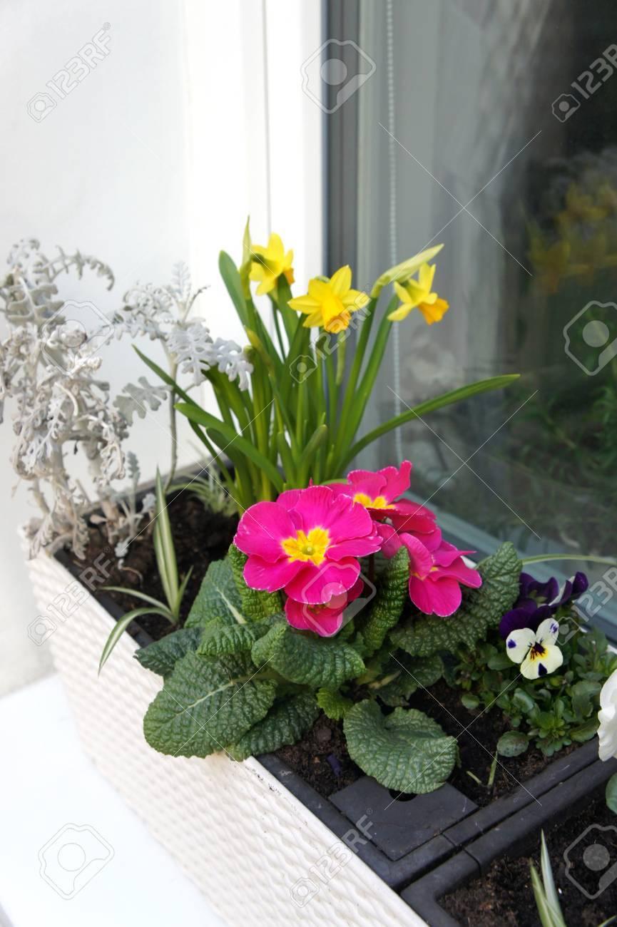 Beautiful Modern Terrace With Seasonal Spring Flowers Stock Photo