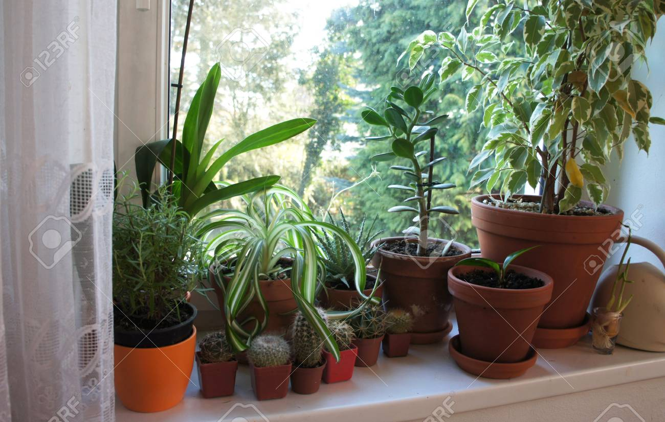 Schöne Mischung Aus Zimmerpflanzen Auf Dem Fenster Lizenzfreie Fotos