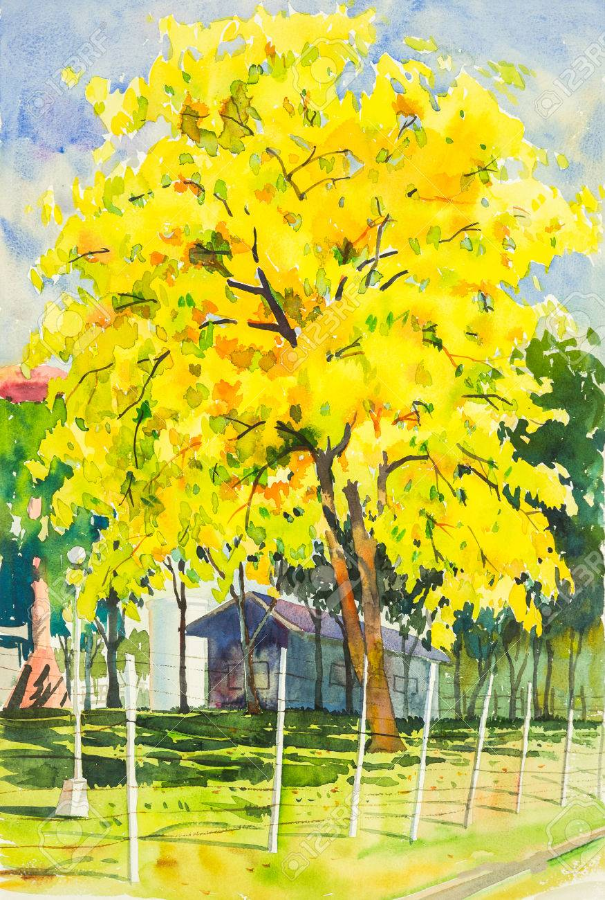 Watercolor Painting Yellow Orange Color Of Golden Shower Tree