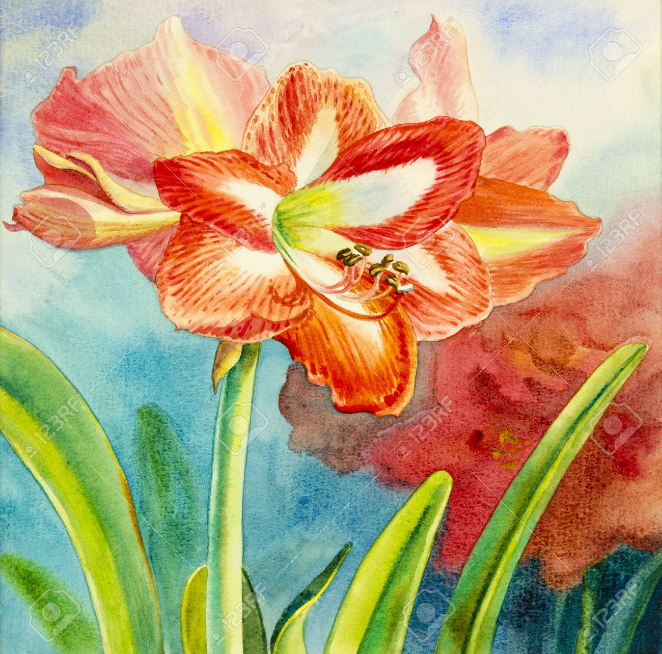 Watercolor Painting Original Realistic Red Flower Of Amaliris
