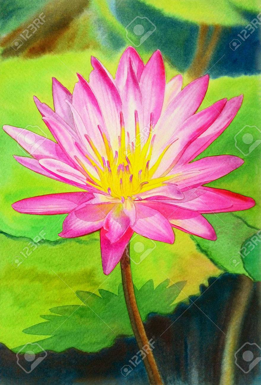 2886f0290 Stock Photo - Watercolor painting original realistic pink colorr of lotus  flower and green leaves in pond background. Original painting