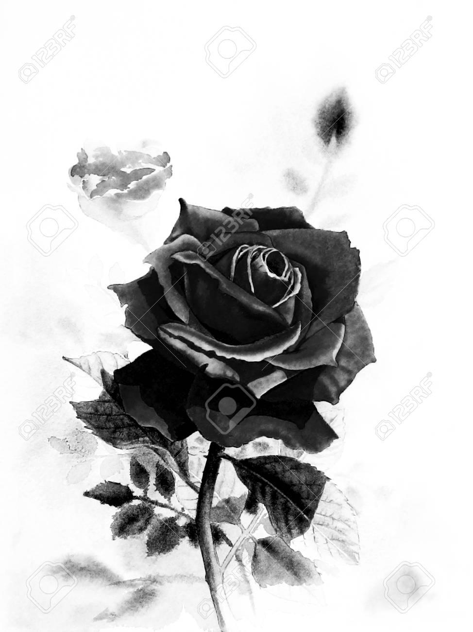 Watercolor Original Realistic Painting Black Color Of Rose Flower