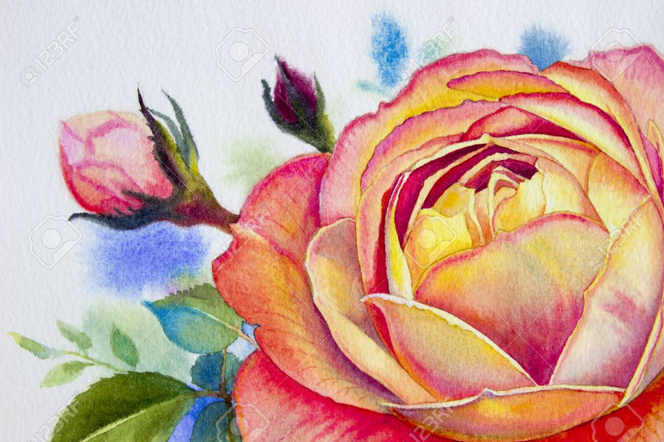 Orange Pink Rose Flower Watercolor Paintings Original Of Roses
