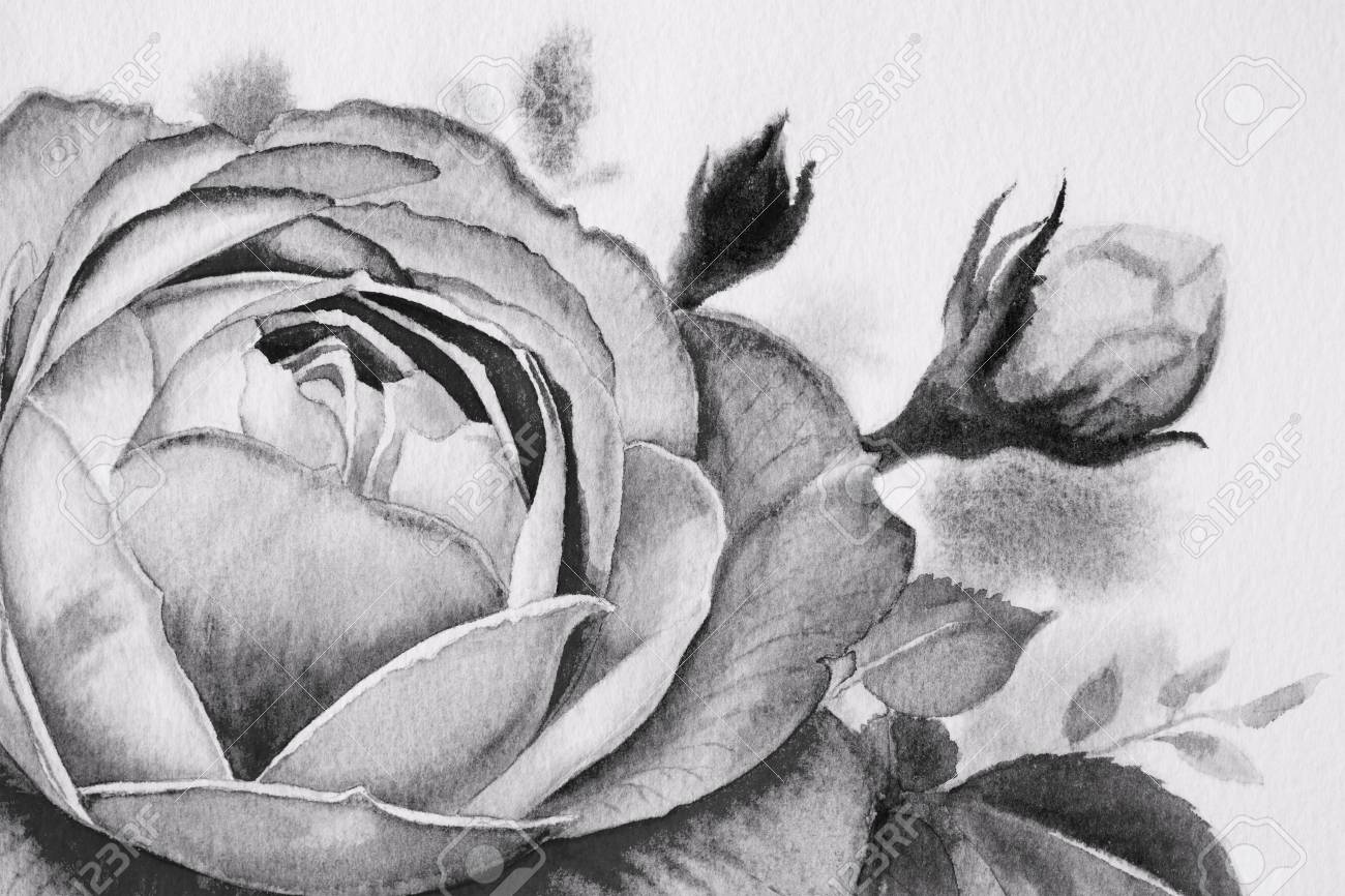 Black And White Rose Flower. Watercolor Paintings Of Roses And ...