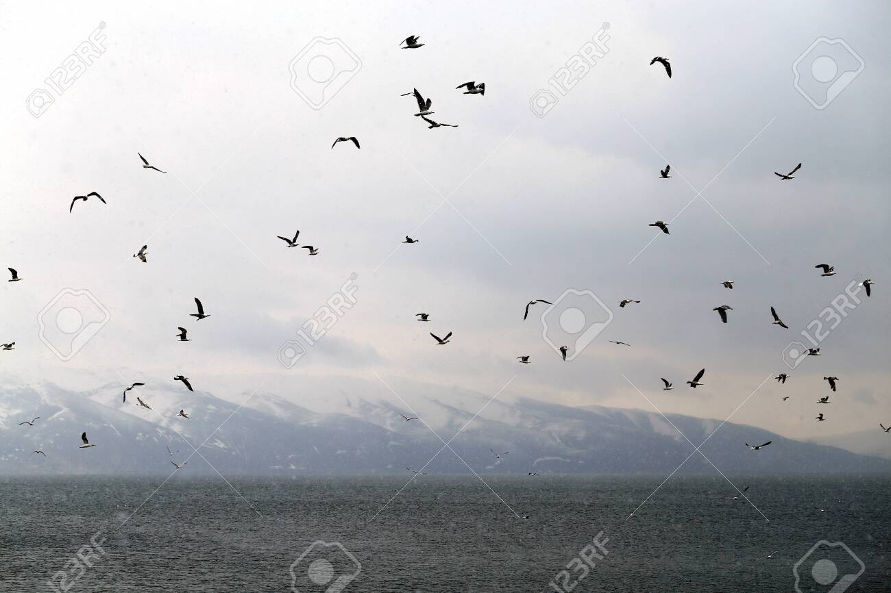 Beautiful spring landscape of a flock of seagulls on the background of lake Sevan - 121236073