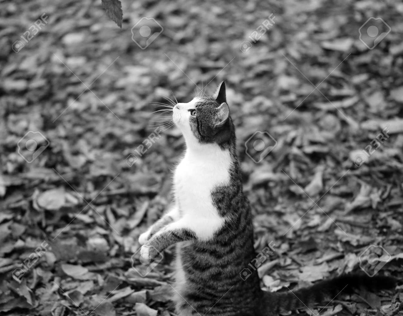 Photo of a cute hungry kitten in the autumn park - 164650872