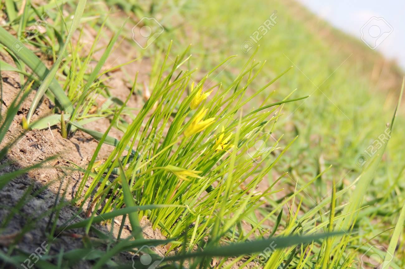 Erste Fruhlingsblumen Bluhen Schneeglockchen Auf Sonnenschein