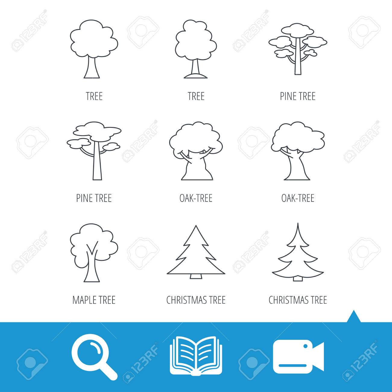 Maple Tree Diagram Christmas Photo Stock Vector Pine And Oak Icons Trees Linear Signs Forest Flat