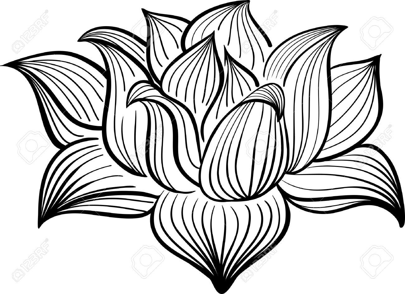 Vector Negro Y Flor De Loto Blanco Dibujado En El Estilo De Dibujo