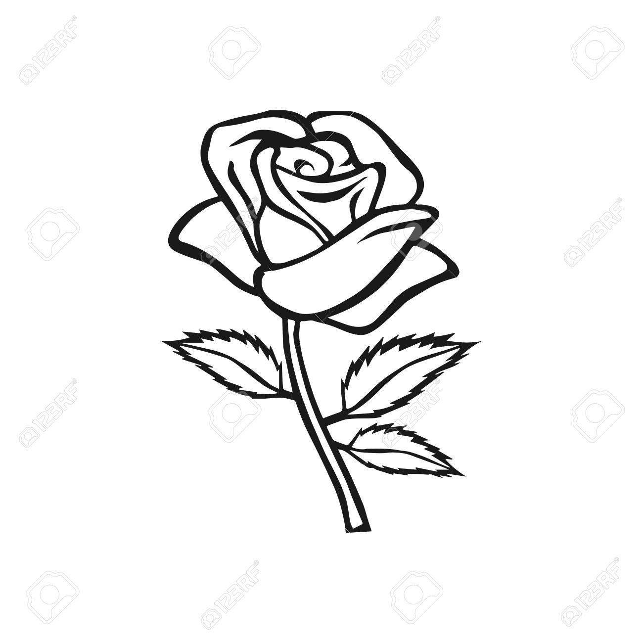 Rose Sketch Rose Motif Flower Design Elements Vector Illustration