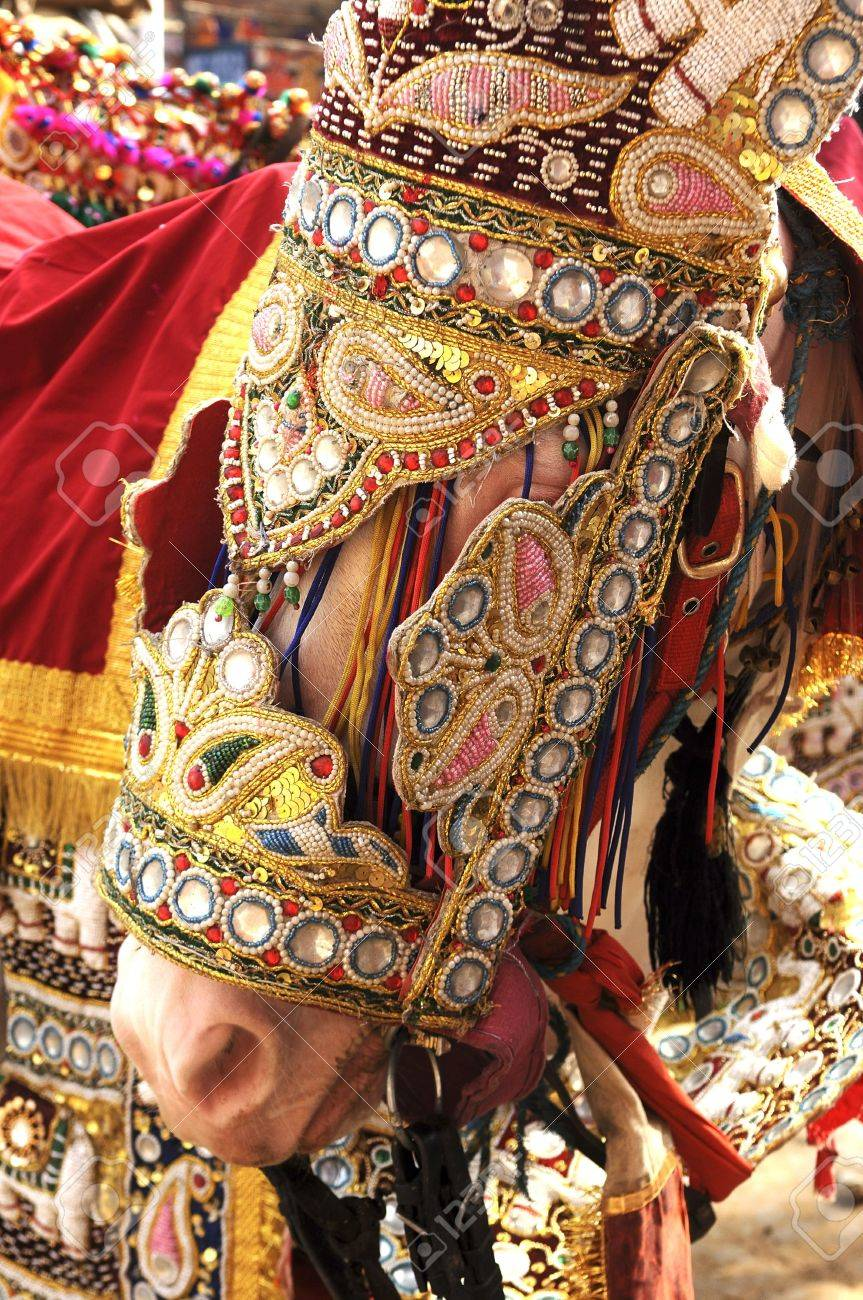 India Jaipur Decorated Horse For A Wedding; Traditional Golden ...