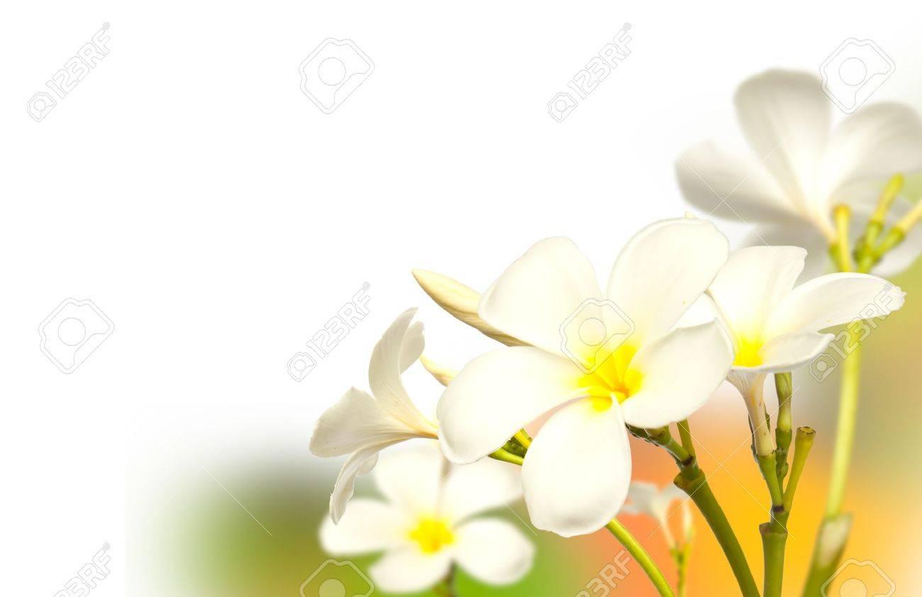 Frangipani Spa Flowers border.Plumeria Stock Photo - 10074607