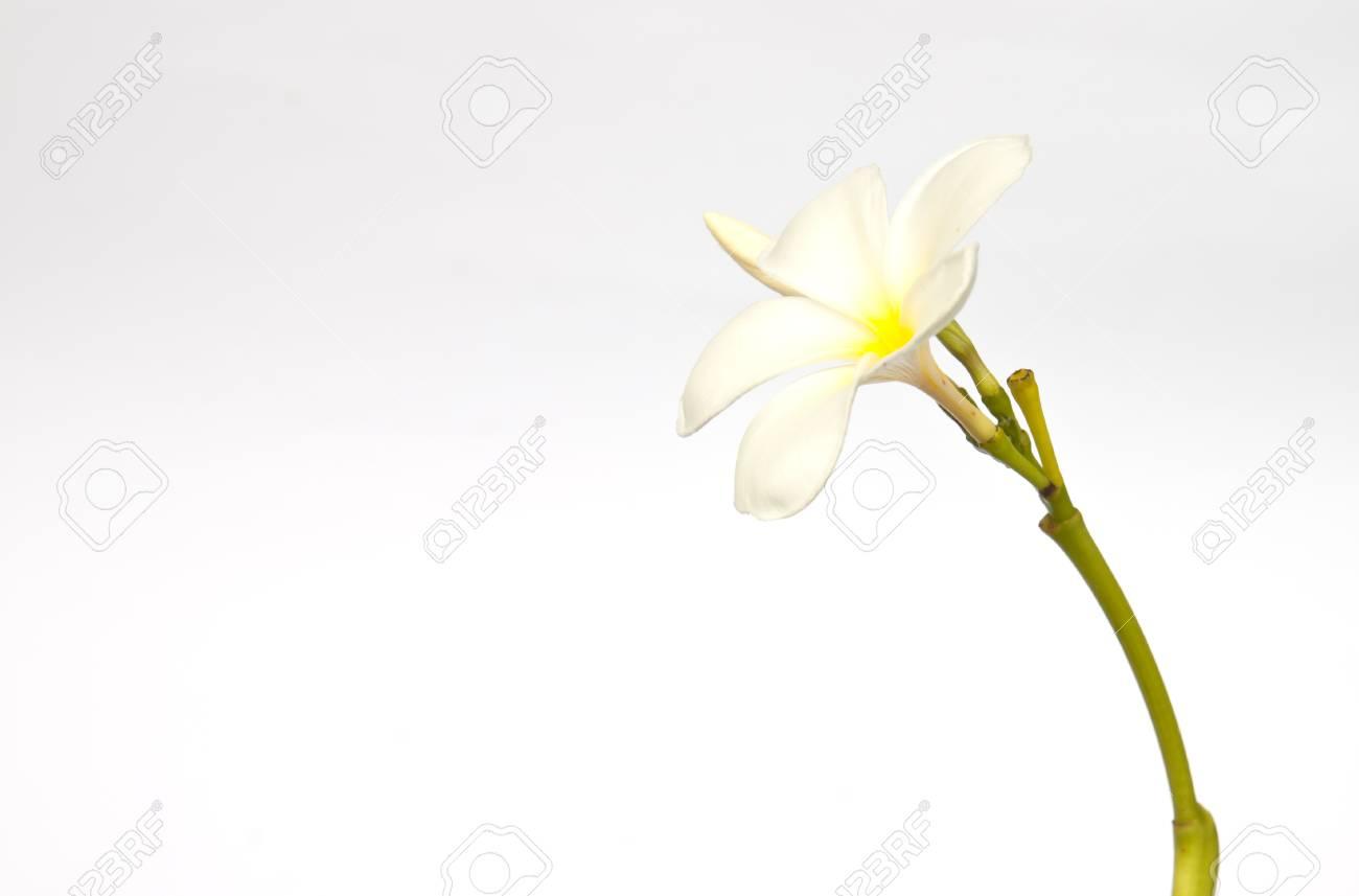 Frangipani Spa Flowers border.Plumeria Stock Photo - 10074605