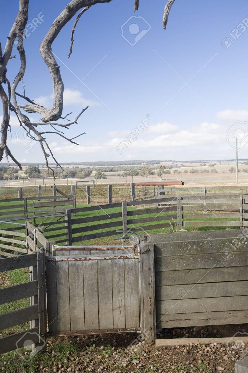 Empty Cattle Yards In Rural Australia