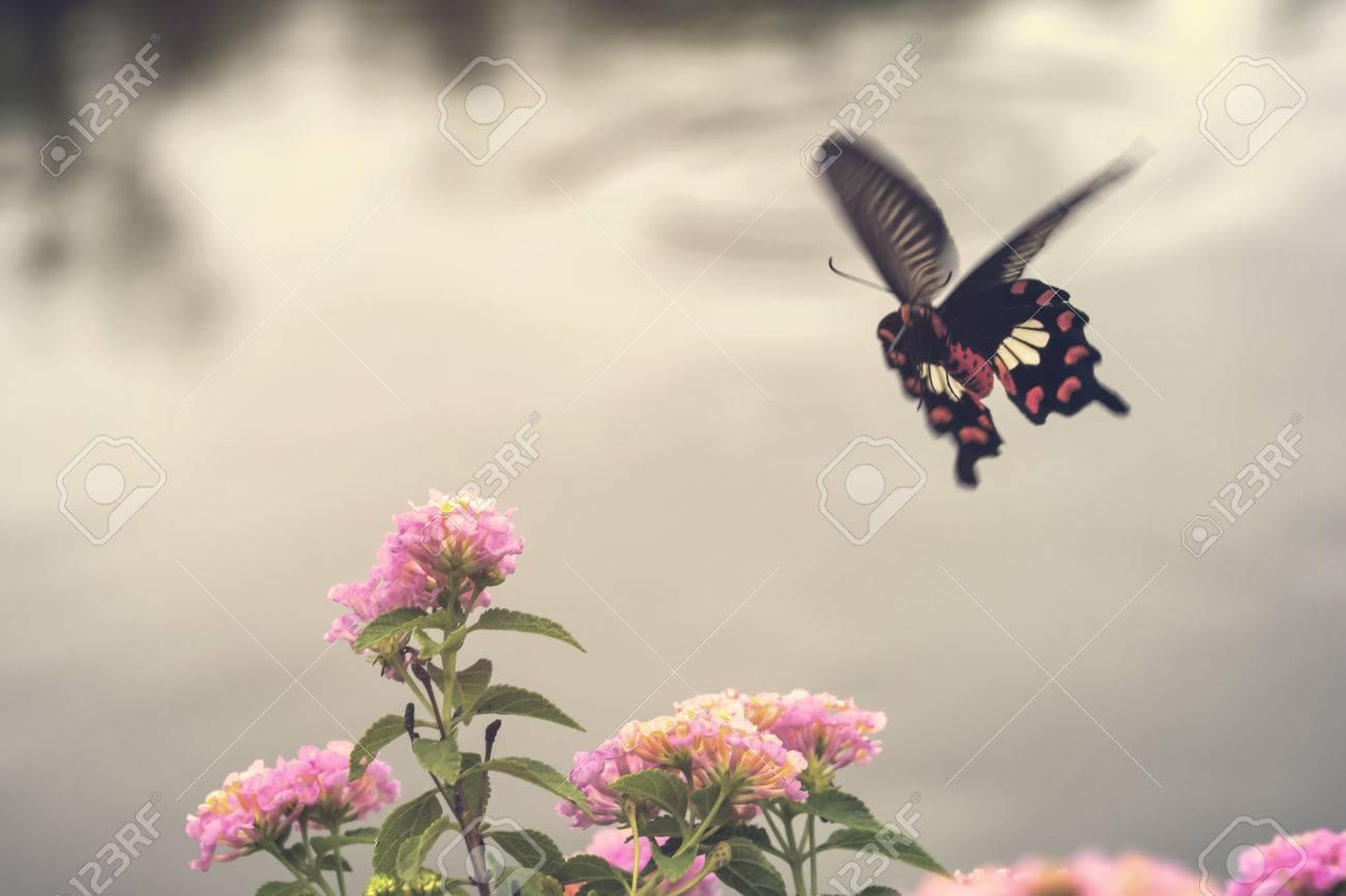 Flores Rosadas Hermosas Con El Movimiento De La Mariposa Del Vuelo