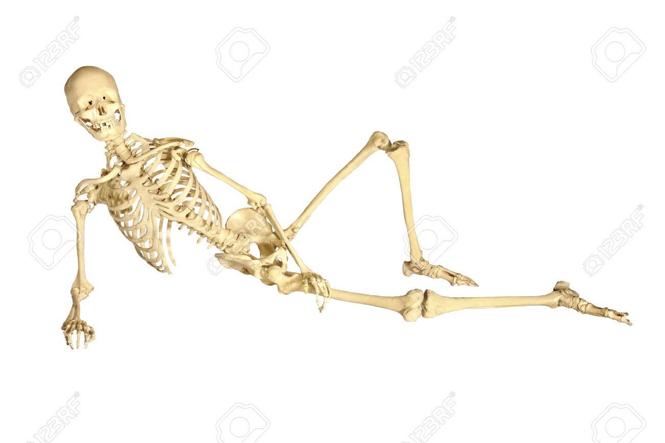 Vollständige Menschliche Skelett Zurückgelehnte, Isoliert Auf Weißem ...