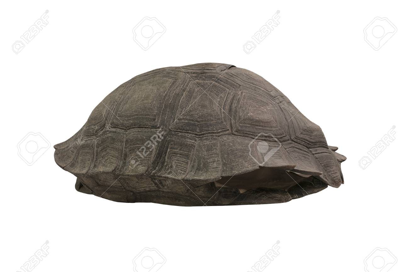 Isolated turtle shell on white background