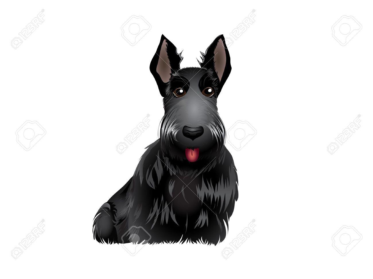 Black Scottish Terrier vector illustration eps 10 Stock Vector - 12351279